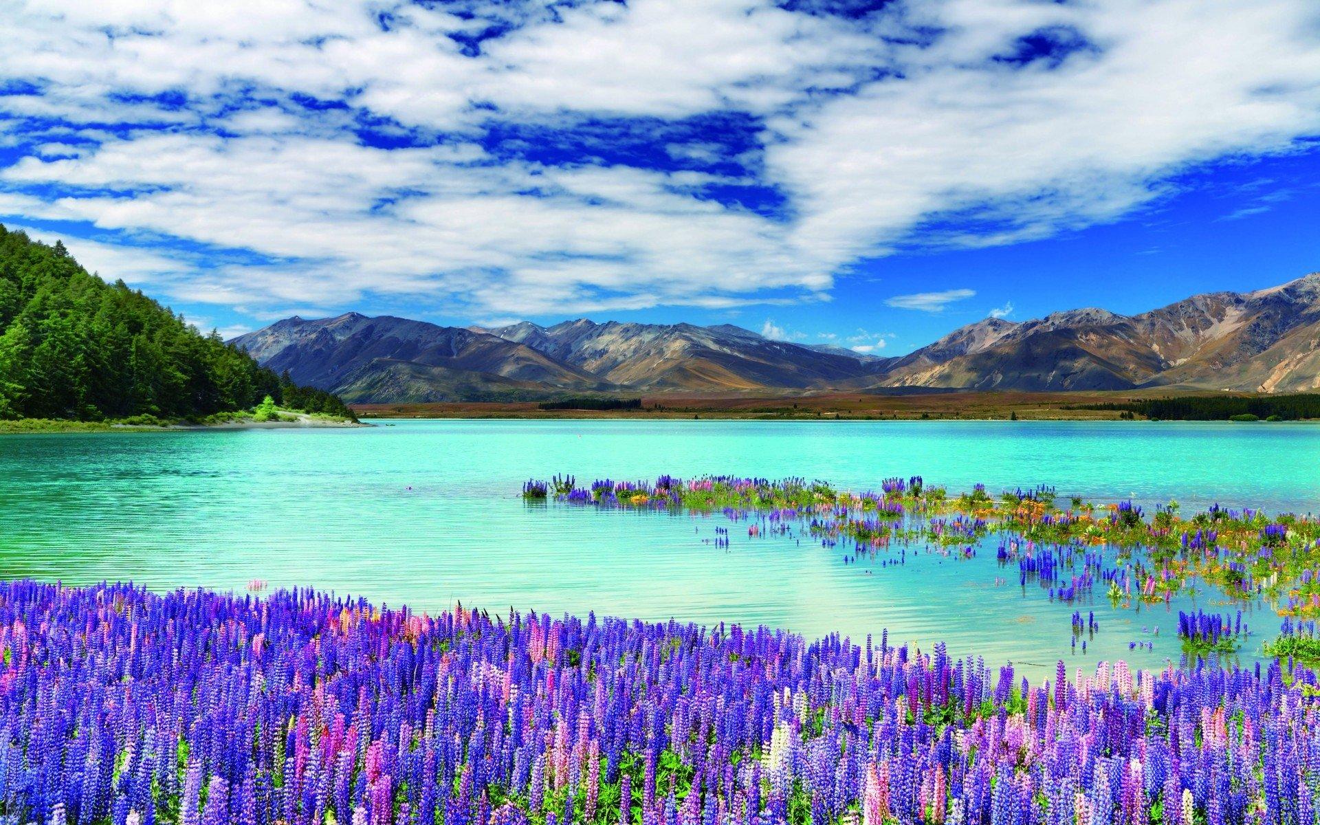10 Keindahan Alam yang Hanya Bisa Ditemukan di New Zealand