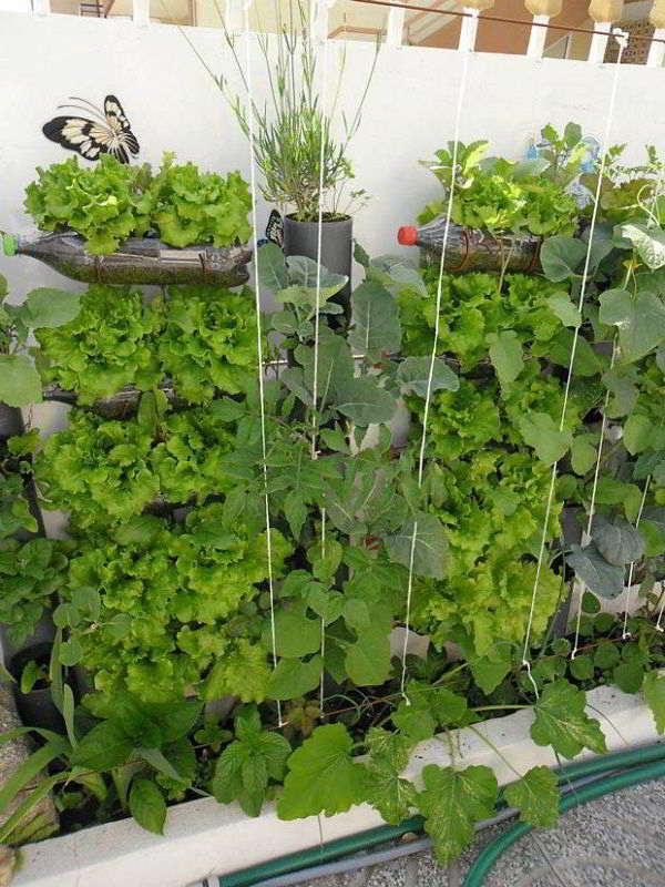 5 Ide Kreatif Untuk Menata Kebun Sayur Di Rumah
